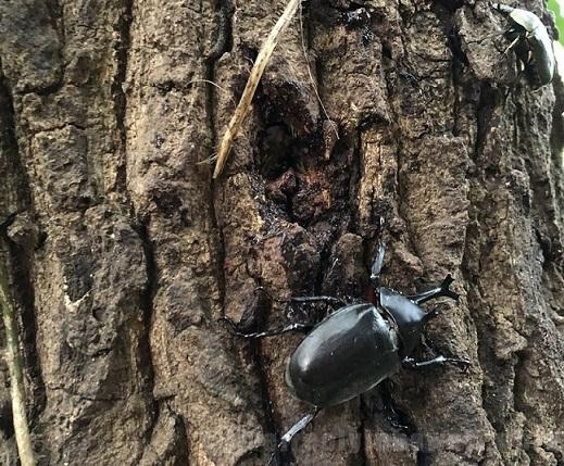 子供と一緒に虫とり(昆虫採集)に行こう カブトムシ、クワガタの潜む場所 服装準備