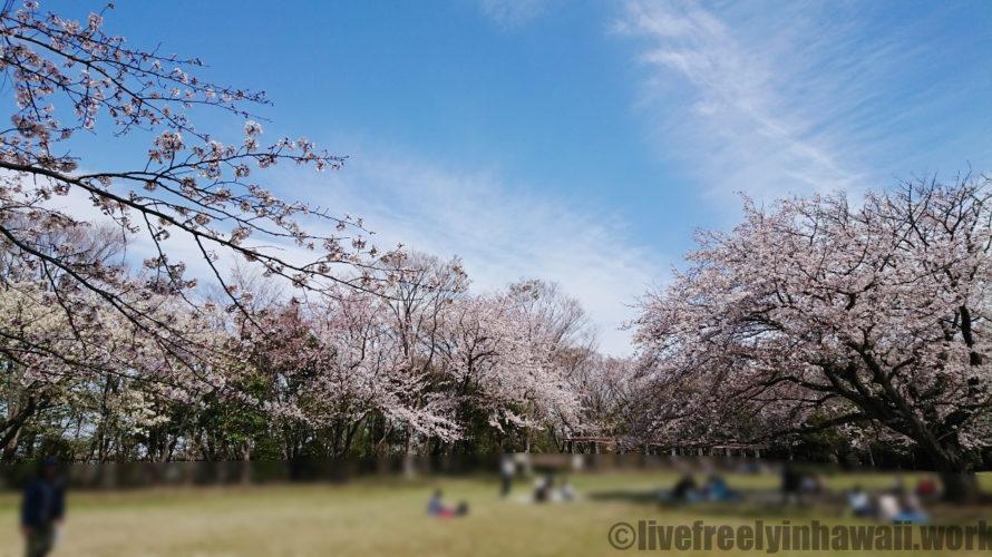大庭城址公園・駐車場、駐輪場、遊具の詳細と春夏秋冬の風景まとめ