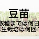 豆苗(とうみょう)は何日で再収穫できる?再生栽培は何回まで?