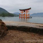 二泊三日の広島旅行!おすすめの観光名所の行き方とルートは?1日で宮島(厳島神社)から山口県錦帯橋までまわれる?