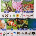 ポケット版 学研の図鑑のおすすめポイント3・小さい図鑑って便利!