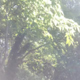リラックス音楽 四季折々、自然の音に癒される